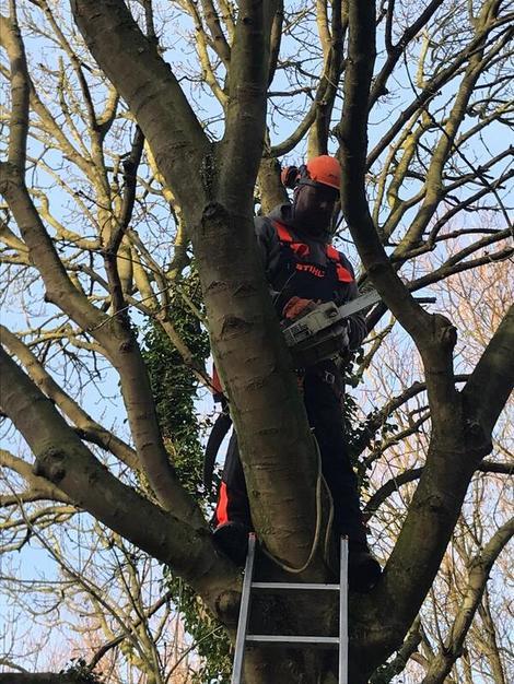 Nottingham Tree Surgery And Arborist Services