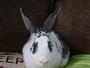 rabbit boarding